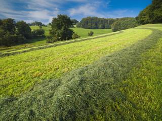September: gemähte Wiese und Mischwald in Mitteleuropa