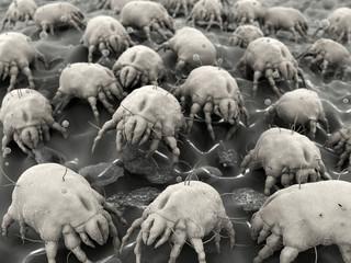 Hausstaubmilben / dust mites