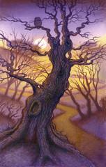 Moody tree scene with owl