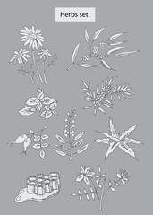 herbs set hand drawn illustrations