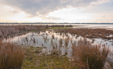 Marshy area in a Dutch nature reserve