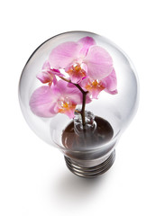 light bulb witn Orchid flower: power and nature