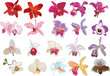 isolated twenty orchid flowers
