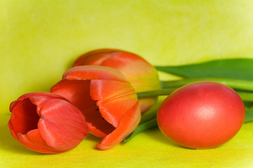 red Easter egg and tulip