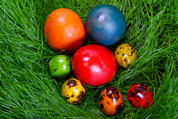 Colorful painted easter eggs in the grass