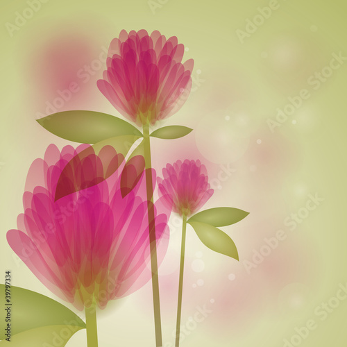 Clover / Floral fresh background