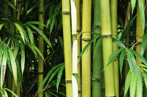Bamboo close up © axle