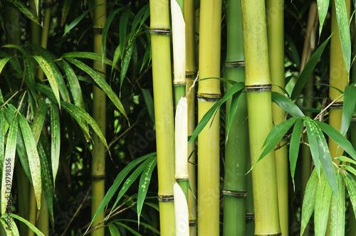 Bamboo close up © axle
