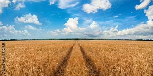 Fototapeten,gerste,blau,straßen,himmel