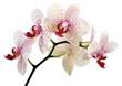 Fototapeten,schönheit,botanisch,exotisch,flora