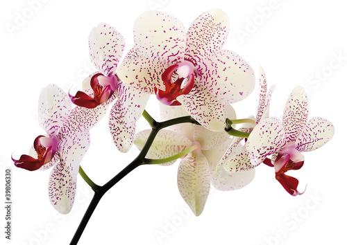 Fototapeten,schönheit,botanischer garten,exotisch,flora