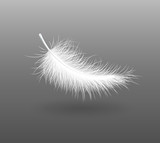 feather falling light small white swan  vector illustration