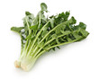 chicory catalogna frastagliate, italian vegetable