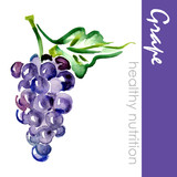 Fototapety Hand Painted Grape