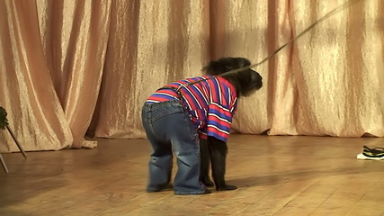 performance of a circus monkey