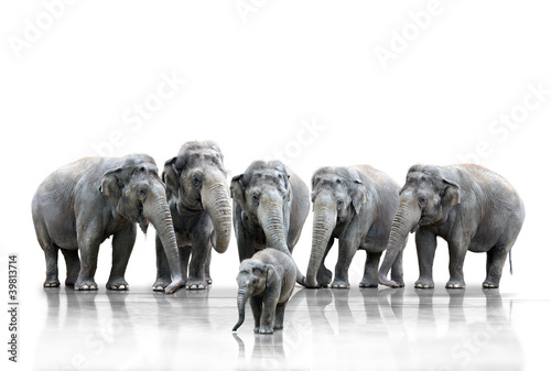 Fototapeta Elefantenherde
