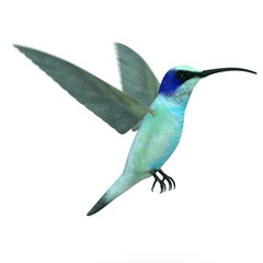 3d render of colibri bird