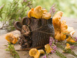 mouse with chanterelles