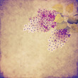vintage lilac branch