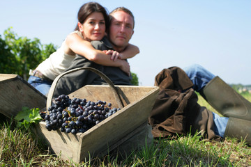 Couple hand picking grapes