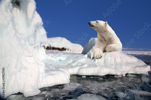 Fototapeten Eisbar polar bear standing on the ice block