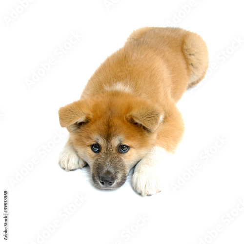 Isolated; Puppy