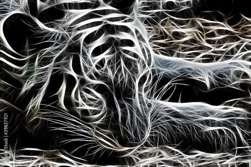 Fototapety, obrazy : Tiger