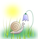 Snail looking at a Bluebell