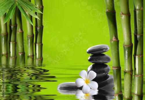 Fototapeten,wasser,kurort,bambus,leaf