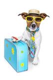 Fototapety dog as a tourist