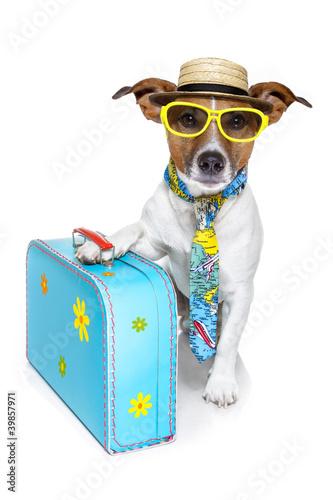 Fotobehang Dragen dog as a tourist