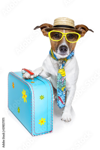 Foto op Canvas Dragen dog as a tourist