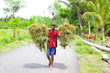 Indonesian farmer carrying grass .Lombok