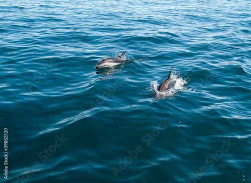 Fotobehang Dolfijn Banc de dauphins obscurs