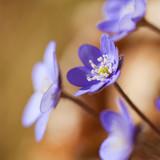Fototapety Farbenfrohe Blumen