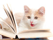 Little cat read a book, isolated on a white background
