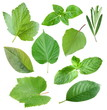 Collection of garden leaves