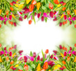Tulips background with free space for your text