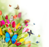 Fototapeta uroda - kwiat - Insekt