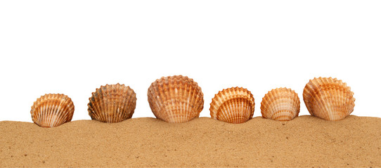 Large seashells on the sand, Studio shot