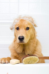 Cute dog unhappy about bath time