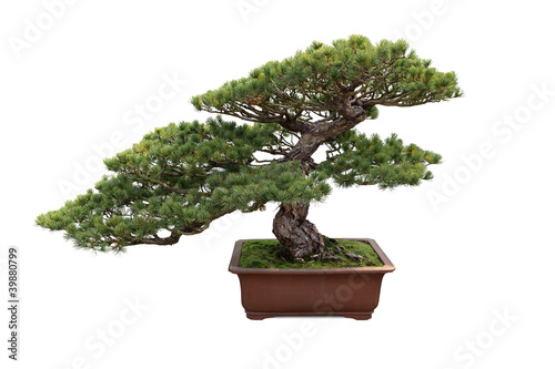 Aluminium Bonsai bonsai pine tree