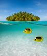 Palm island and underwater world - 39882716