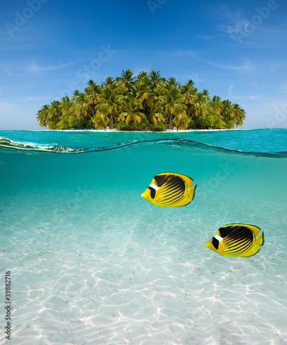 wyspa-palmowa-i-podwodny-swiat
