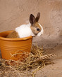 Mini rabbit in big flowerpot