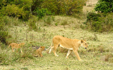 female lion and baby in Kenya