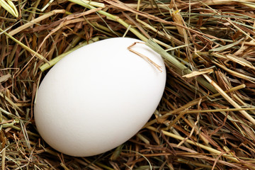 White hen egg