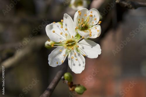 wiosenne-kwiaty-moreli