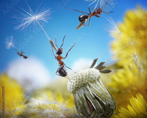 ants flying with umbrellas - seeds of dandelion, ant tales