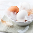 Eggs and Feathers in a Bowl. Easter Arrangement